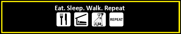 Dog walker Bournemouth, Poole, Christchurch, Ringwood & surrounding areas.