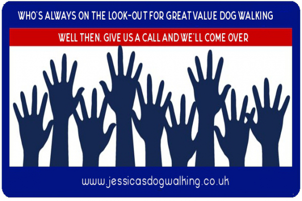 Great value dog walking in Poole, Bournemouth, Christchurch, Ringwood areas.